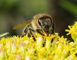 Méhpempő és más hatásos termékek