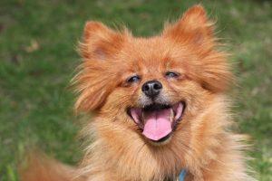 A Happy Dog kutyatáp olcsó