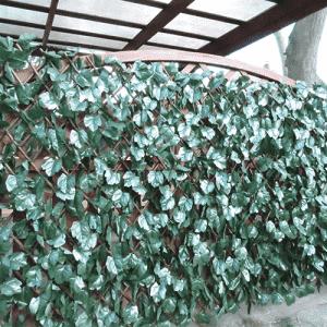 műsövény borostyán